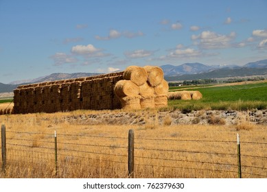 Round haybales stacked at the edge of alfalfa crop land.