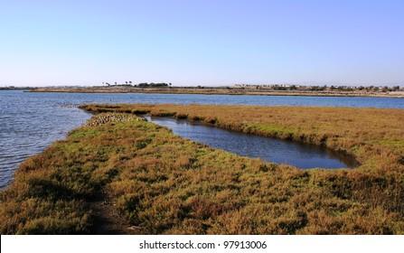 Round inlet in a salt water marsh, Huntington Beach, CA