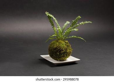 round kokedama