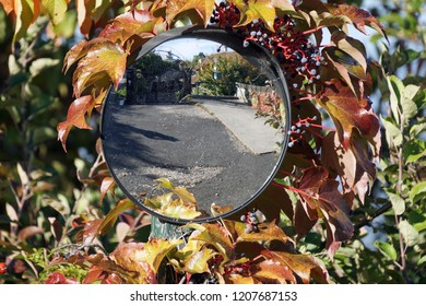 Round miror burried in Virgnia creeper in fall colors
