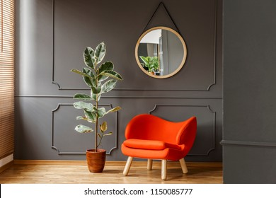Round mirror hanging on the wall with molding in real photo of dark sitting room interior with orange armchair and fresh potted plant