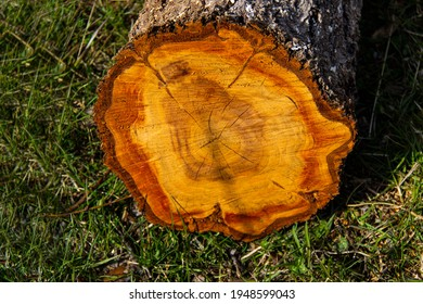 Round piece of wooden stump cut with aged tree rings. Brown and tan wood texture with cracks and bark.