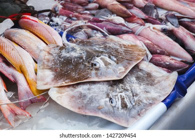 Round ribbontail ray fishes lay on a counter of fish market in Kota Kinabalu, Malaysia