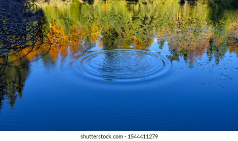 Runde Äpfel aus einem heruntergefallenen Kieselstein im Teich mit Reflexion des Herbstwaldes
