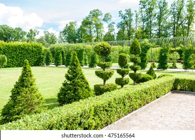Round shaped topiary green trees with hedge on background in Rundale ornamental garden. latvia. Vibrant summertime outdoors horizontal image.