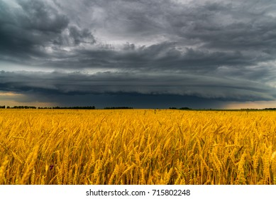 Round storm cloud over a wheat field. Russia