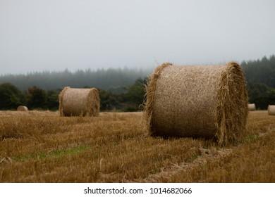 Round Straw Bale In Stubble Field on misty day, Ireland
