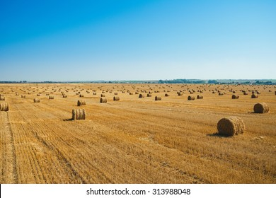 Round straw bales in harvested fields and blue sky