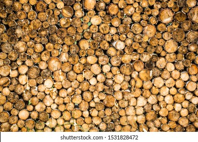 Round teak woods trees circle stumps cutted group. Deforestation. Tree stumps background. Pieces of teak wood stump background. Round teak wood stump.