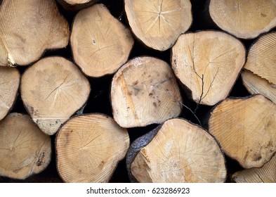 round timber background