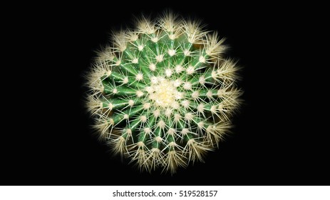 Round Wet green cactus isolated on a black background