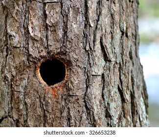 Round Woodpecker Hole in Trunk of Tree