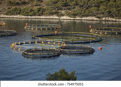 Rounded cages for breeding of sea bream and sea bass on fish farming in south east of island Brac in Croatia