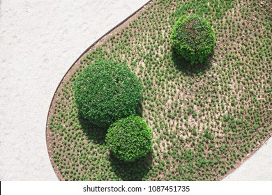Rounded tree in garden
