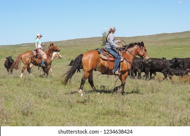 Rounding up cattle at a branding in the sand hills