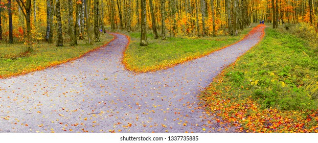 The route in the autumn park diverges into two hiking trails in different directions.