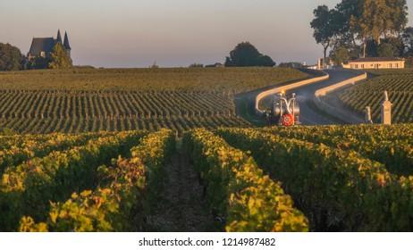 Route des Chateaux, Vineyard in Medoc, amous wine estate of Bordeaux wine, France