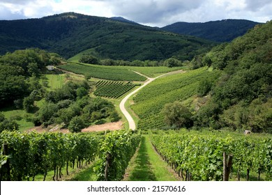 Route des vines in Alsace  France, vineyard.