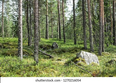 Rovaniemi is a city and municipality of Finland. It is the administrative capital and commercial centre of Finland's northernmost province, Lapland. Forest