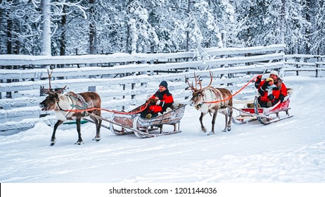 Rovaniemi, Finland - December 30, 2010: Racing on Reindeer sleigh in Finland in Lapland in winter.