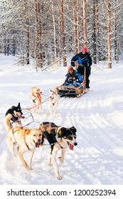 Rovaniemi, Finland - March 3, 2017: Indian family with child riding Husky dog sled in Finland in Lapland in winter.
