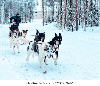 Rovaniemi, Finland - March 3, 2017: Family riding Husky dog sled at Finland in Lapland in winter.