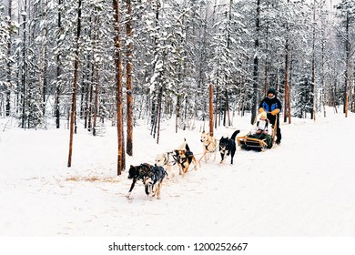 Rovaniemi, Finland - March 3, 2017: Family riding Husky dog sled in Finland in Lapland in winter.