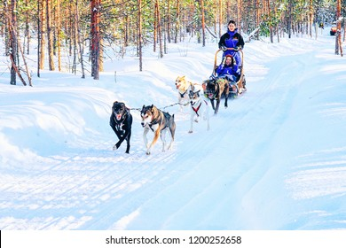 Rovaniemi, Finland - March 5, 2017: Family in Husky dog sled in Finland in Lapland in winter.
