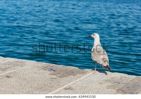 Rovinj, Croatia, Seagull