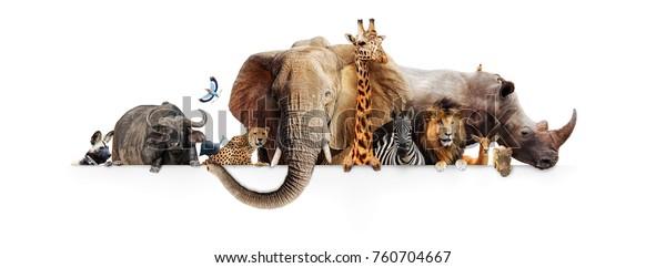 African safari animals wallpaper for walls