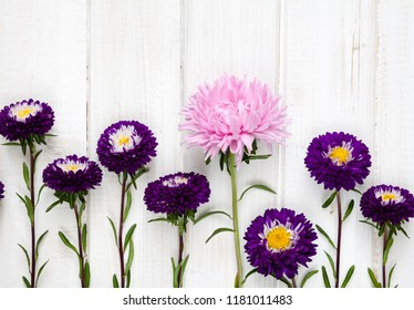 Row of aster flowers on a white wooden background with space for text.