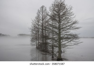 Row of Bald Cypress trees in ice and fog at Stumpy Lake in Virginia Beach, Virginia.