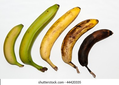 Row of Bananas showing stages of ripening could show age and ageing in humans