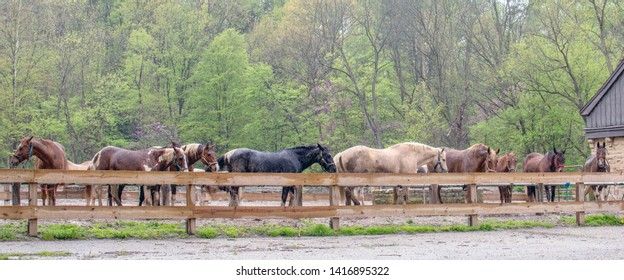row of Beautiful horses in a riding stable, standing in a light mist of rain