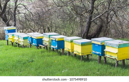 A row of bee hives in a field. Blue and yellow hive of bees on a green meadow  in the Mediterranean climate. Hives in an apiary with bees flying to the landing boards. Apiculture