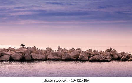 A row of birds on boulders. Recorded in Naples.