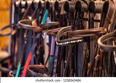 Row of bridles in a tack room on a forse riding farm
