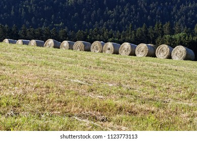 A row of cart of hay in a Chartreuse meadow
