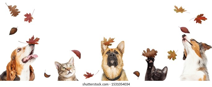 Row of cats and dogs looking up at falling autmn colorful leaves. Web banner or social media cover with copyspace