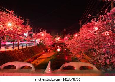 row of cherry blossoms near tamatsukuri hot spring town, shimane prefecture