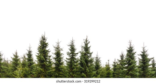 Row of Christmas pine trees isolated on a white background