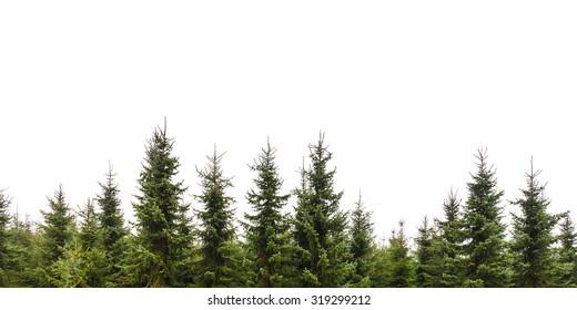 Rij van kerst pijnbomen geïsoleerd op een witte achtergrond