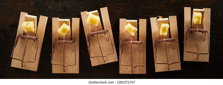 Row of cocked spring wooden mousetrap bars with cheese, viewed from above on dark background. Banner concept