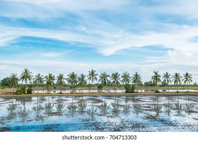 Row of coconut tree reflect on water and blue sky background