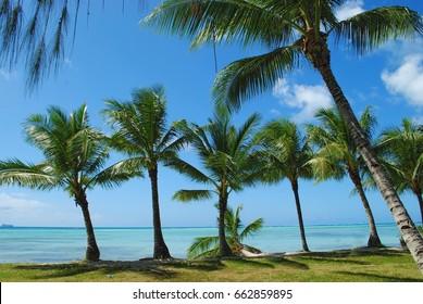 Row of coconut trees along the idyllic Micro Beach in Saipan, Northern Mariana Islands