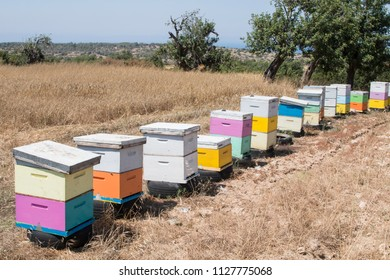 row of colorful beehives on a dry meadow in summer cyprus, Greece, Europe