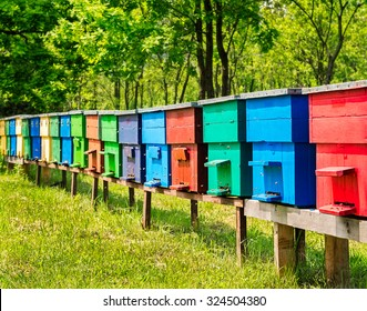 Row of colorful wooden beehives with trees in the background.