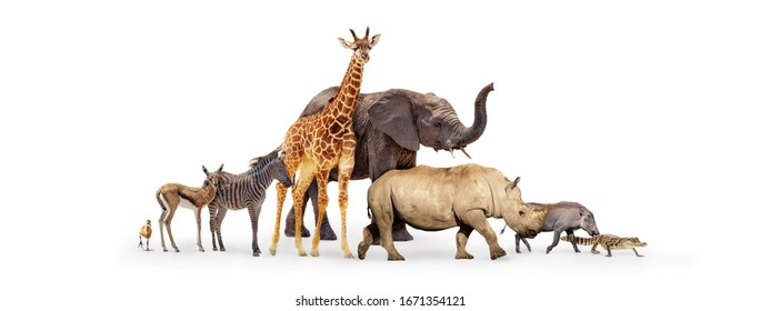 Row of cute baby zoo safari animals walking to side together over white background web banner