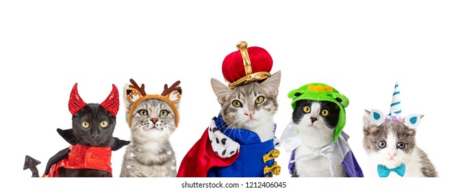 Row of cute cats in Halloween costumes on white web banner