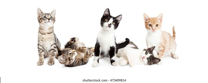 Row of cute and playful kittens. Horizontal web banner sized to fit popular social media timeline cover image holder.